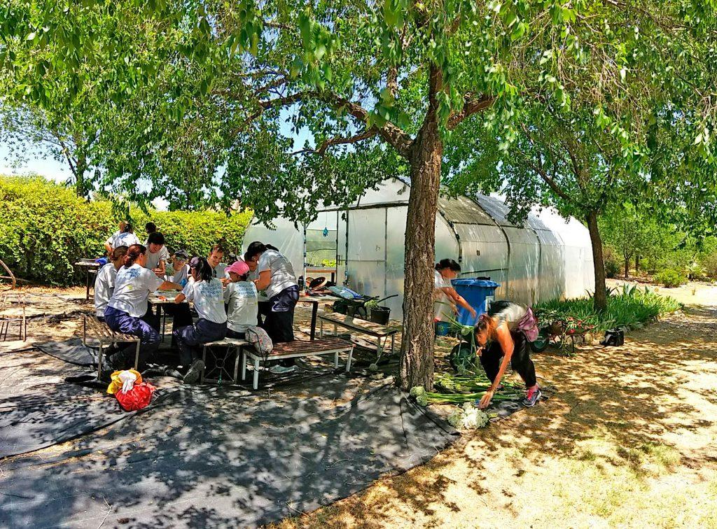 Centro de formaci n actividades auxiliares en viveros for Formacion jardineria