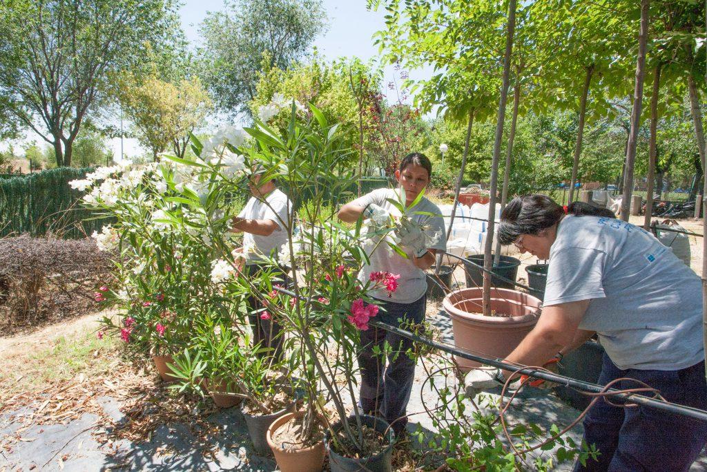 Centro de formaci n actividades auxiliares en viveros for Auxiliar jardineria